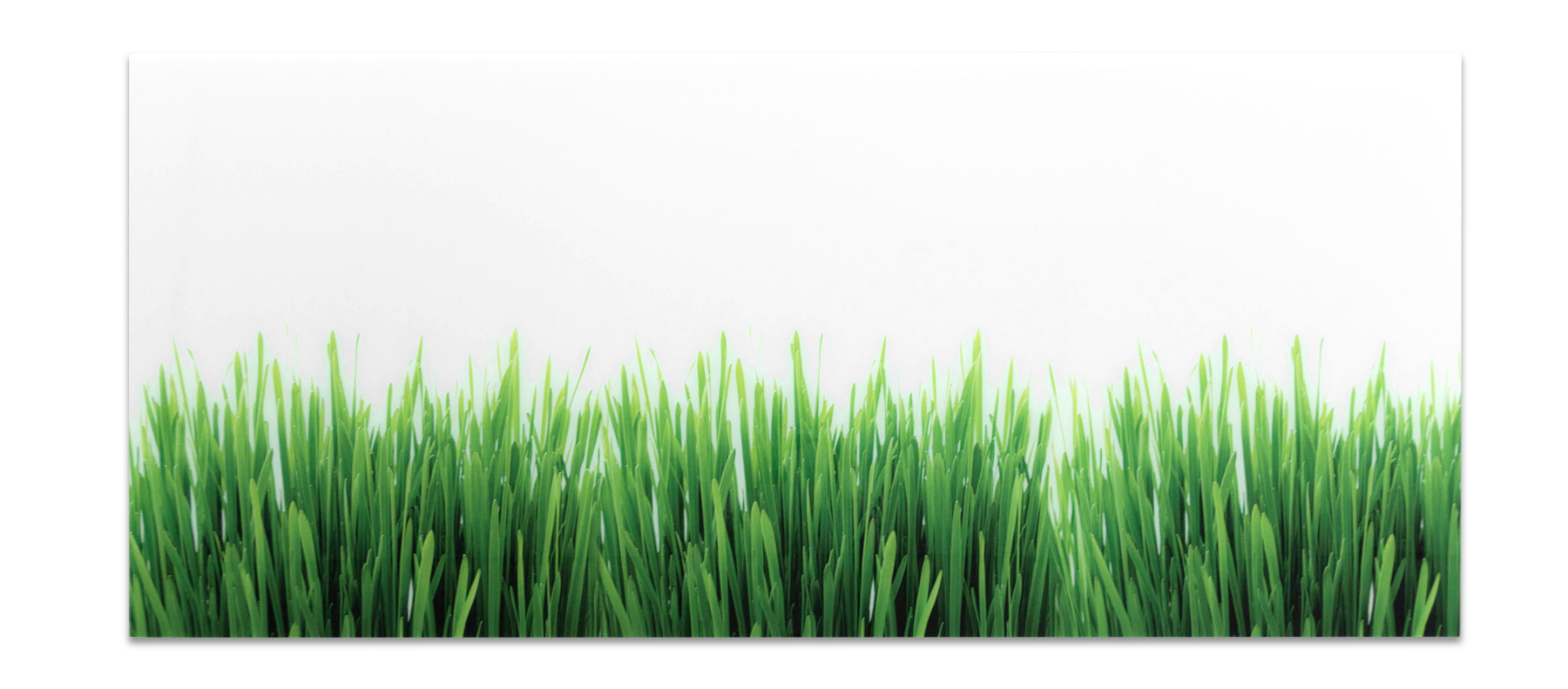 Acrylic Splashback Grass Colour Example for Kitchen